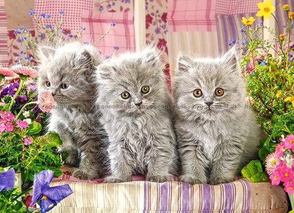 Køb Tre grå kattekillinger, 300 brikker!